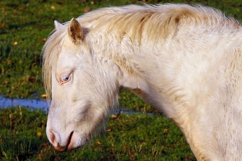 Gibt Es Wirklich Nur Blaue Und Braune Pferdeaugen Pferde De Magazin